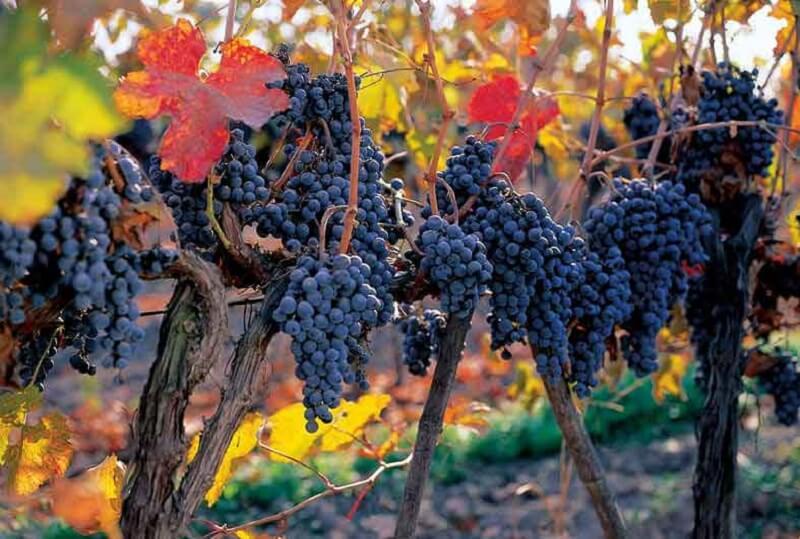 Vinícola em outono do Chile