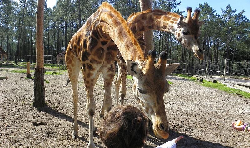 Passeio pelo Parque Safari