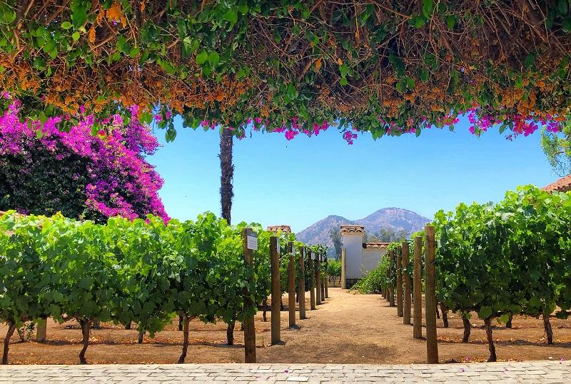Passeio pela vinícola Santa Rita