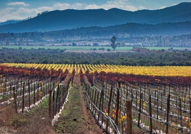 Ingresso para o passeio Full Wine Tour no Chile