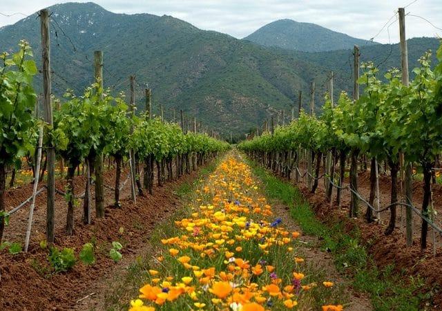 Ingresso para a vinícola Emiliana no Chile